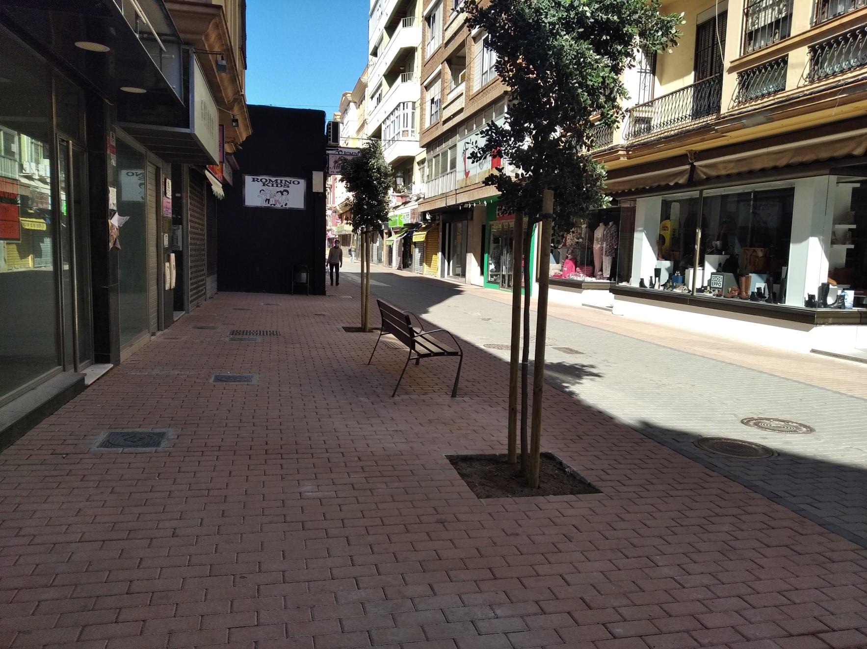 Plantacion arbolado calle San Pablo